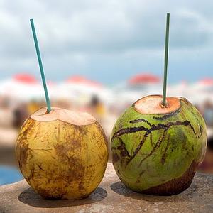 organic fresh green young coconuts