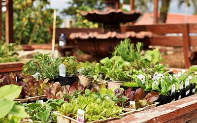 Compton Community Gardens