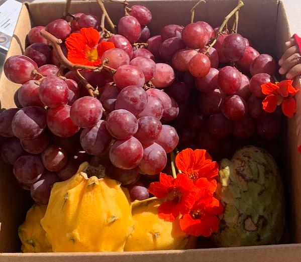 imani-gardnes-produce
